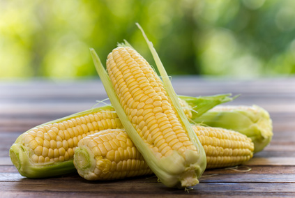 Fresh corn on the wooden table